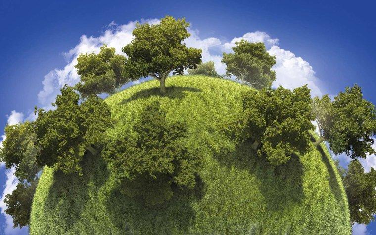 Pour réduire le réchauffement climatique, il faudrait planter 1.000 milliards d'arbres...