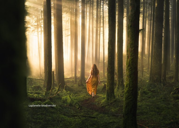 Les fronts de la déforestation se multiplient sur la planète :'(  « La pandémie a mis en évidence le lien entre destruction de la nature et menace sur la santé humaine »...