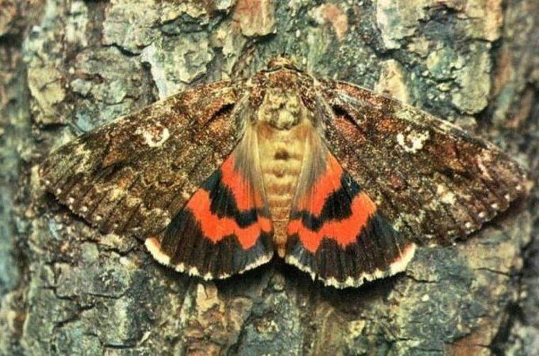 Quels messages codés portent les ailes des papillons ???...