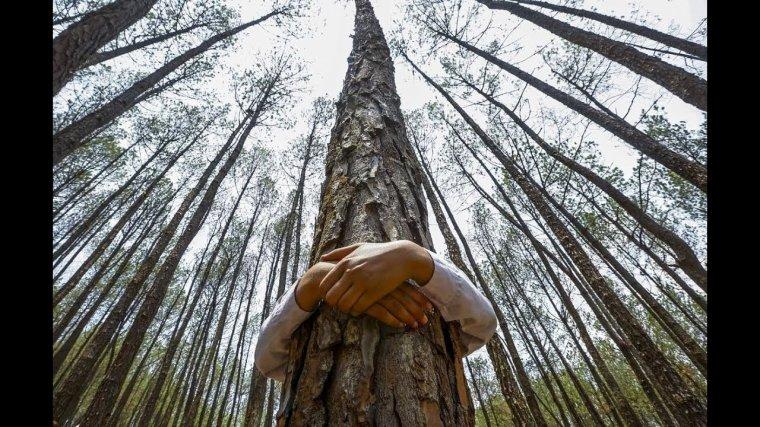 On aime les arbres, alors on conserve les  coquilles d'½ufs, on les fait sécher et on les réduit  en petits morceaux.  A la fin de l'hiver, on repére des arbres fatigués. On verse de la poudre de coquille d'½ufs à leurs pieds .  Ca ne changera pas le monde mais l'arbre appréciera discrètement...