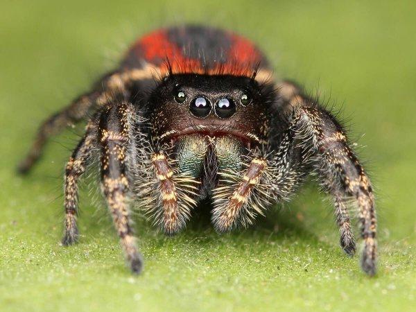 Les piqûres d'araignées n'existent pas : explications sur la fin d'un mythe...