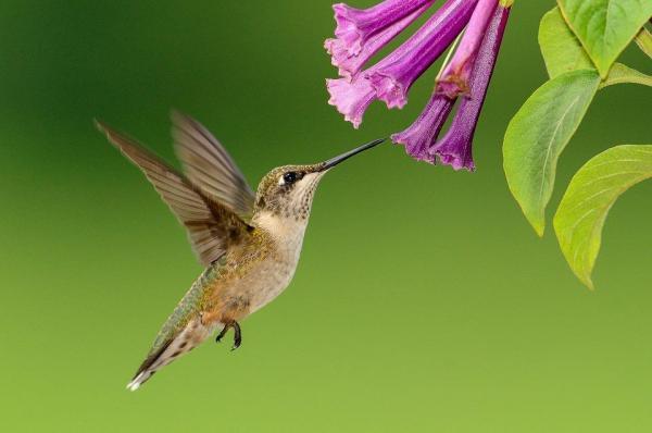Zoogamie : 15 animaux pollinisateurs...