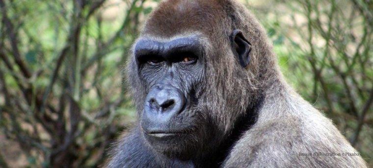 Biodiversité : 68% de la faune sauvage a disparu à cause des activités humaines...
