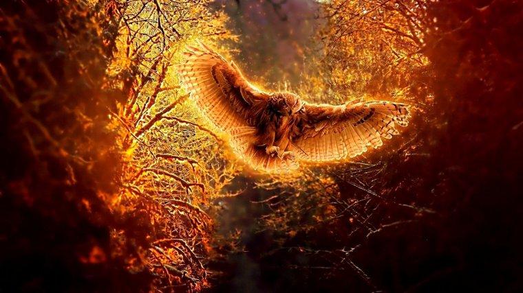 La faune sauvage sous la menace des incendies...