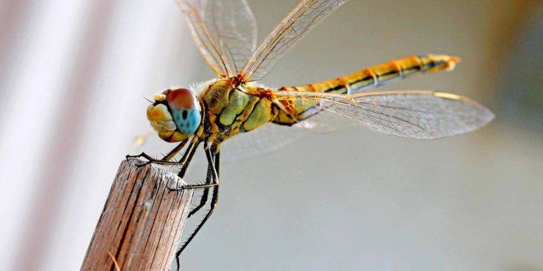 Congrès mondial de la nature : quatre chiffres qui montrent l'effondrement de la biodiversité...