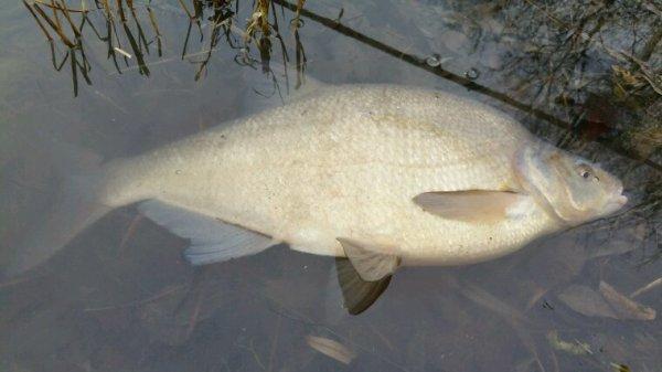 Premier poisson de l'année