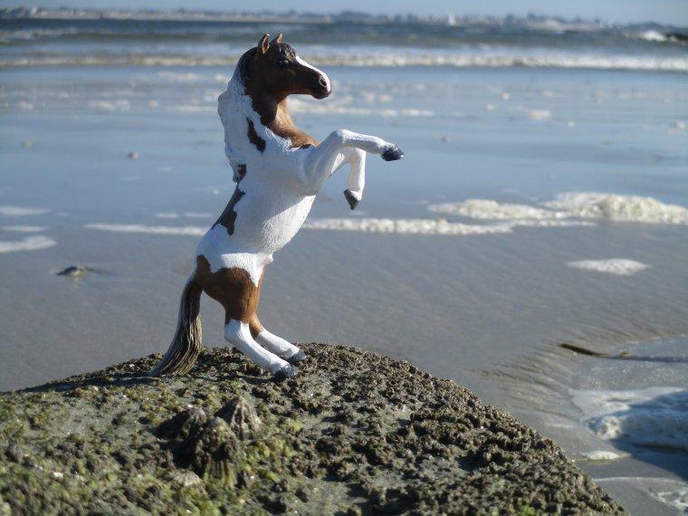 Shooting à la mer !