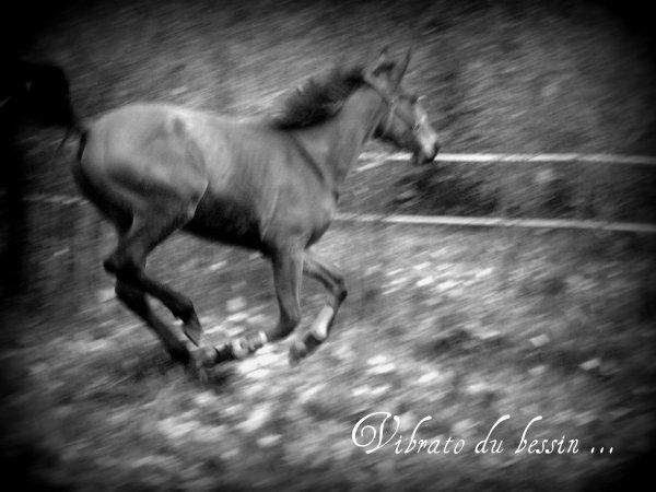 Les chevaux une fantésie en forme d'amoure ...