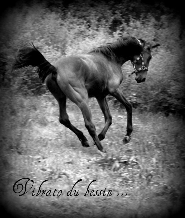 les chevaux , une fantésie en forme d'amoure ...