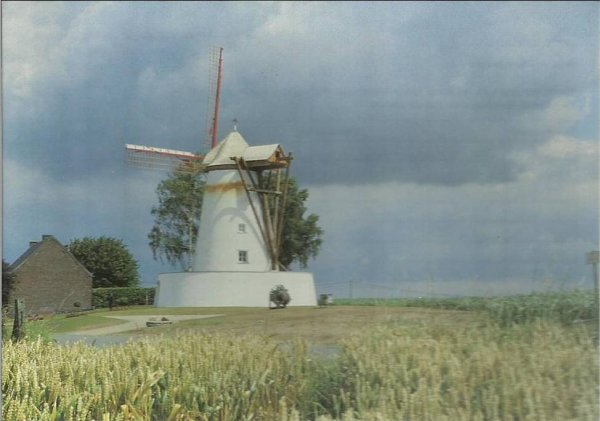 OSTICHES - le blanc moulin