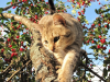 félin sur sa branche