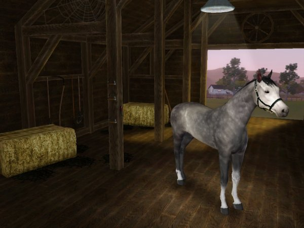 Commande de chevaux