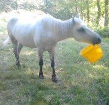 Sacré poney ♥