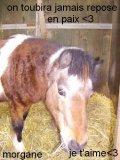 Photo de cheval67150