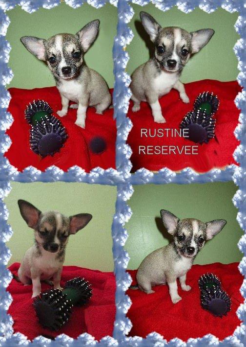 Voici Rustine fille de Joséphine et Osiris, beige grisâtre et blanche, elle est réservée!