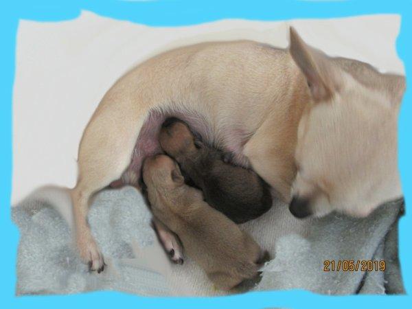 Nés le 20 mai, deux petits mâles