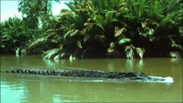 Ah le crococro, le crocrocro, le crocrodile