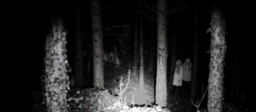 Dans la forêt lointaine....