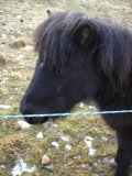 Photo de horse-is-life-73