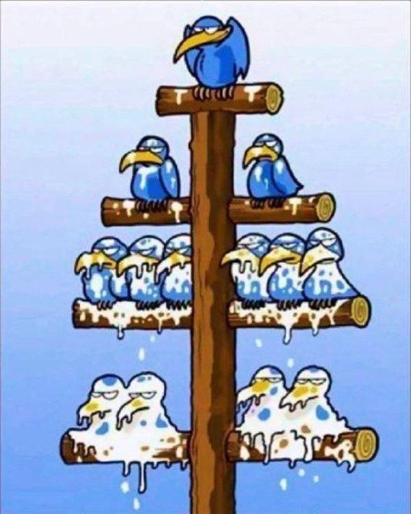 La Hiérarchie des Pigeons!