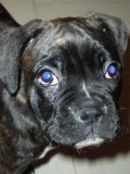 Photo de chupa-boxer