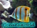 Photo de OceanxWorld