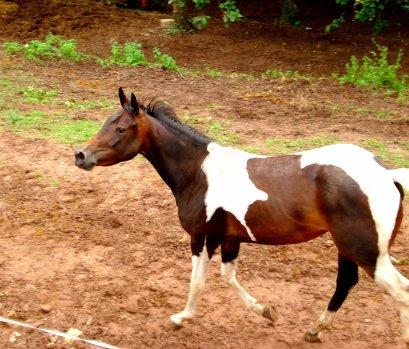 - Être sur le dos d'un cheval pour se libérer de tout.