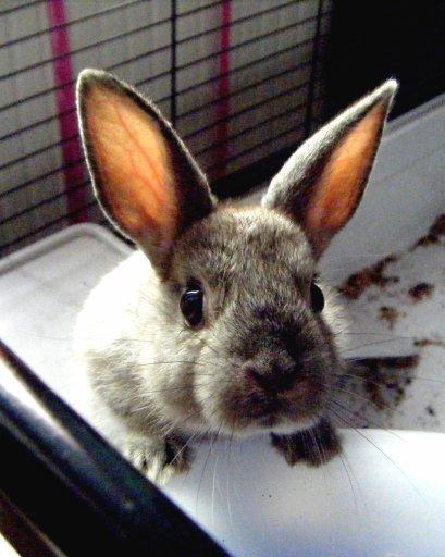 Le lapin, un des meilleurs animaux de compagnie. ♥