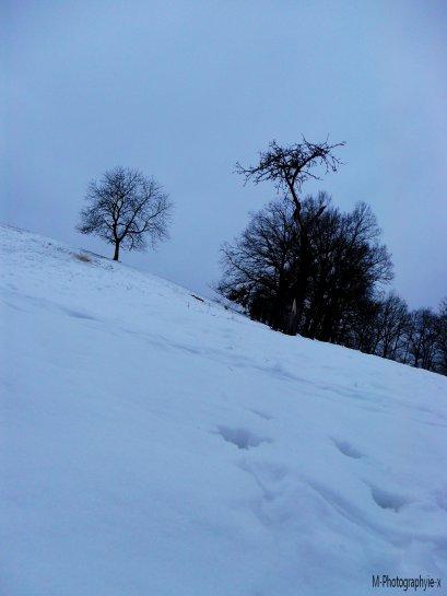 - La neige, c'est tellement beau.