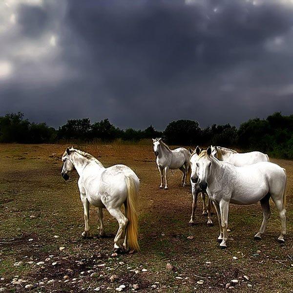 photo des chevaux et poney du C.H.A (club hippique des alpes)