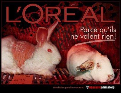 Non à la maltraitance envers les animaux
