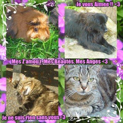 Article n°02 ► Mes z'amour d'animaux ;D  ♥ - Présente Tes animaux