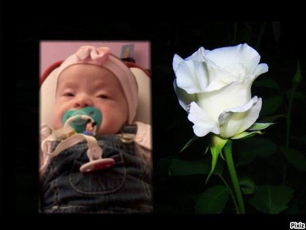 pour maelyna de la par de son papi                                                                                                                                                  Oh! Toi la douce rose blanche, Toi qui te réveille toujours aussi belle Qu'on oublie que tu es prisonnière de ta branche, Ta puretée et ta clarté restera éternelle