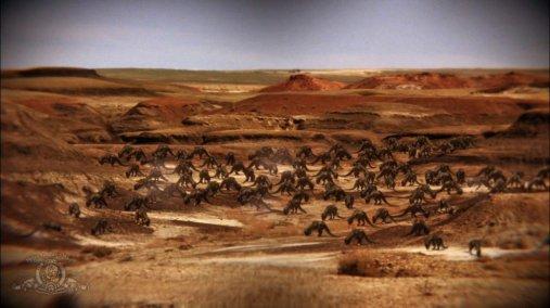 Créatures du désert