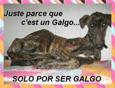 SAUVONS LES GALGOS !!!