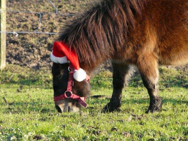 """"""" Un cheval est d'une telle beauté ... On ne se lasse pas de l'admirer dans toute sa splendeur. """" Xénophon"""