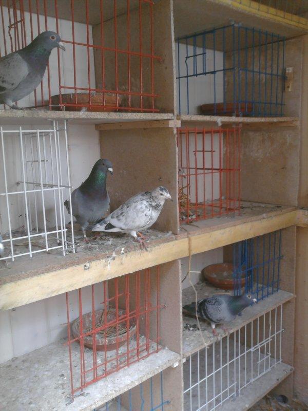 pigeonnier de veufs