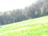 x-Le-portail-vert-x