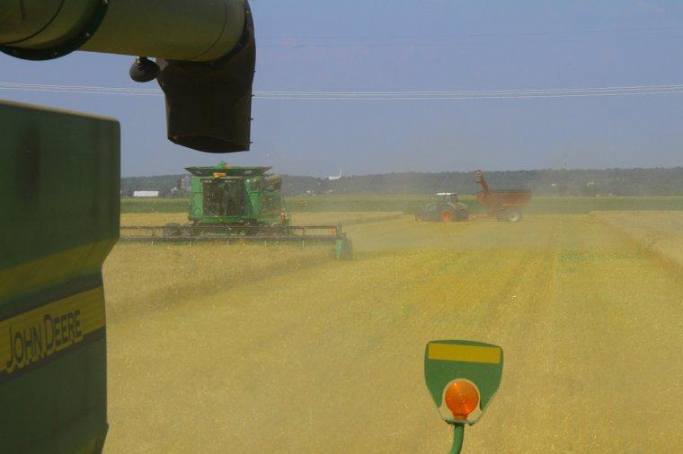 blé en ontario
