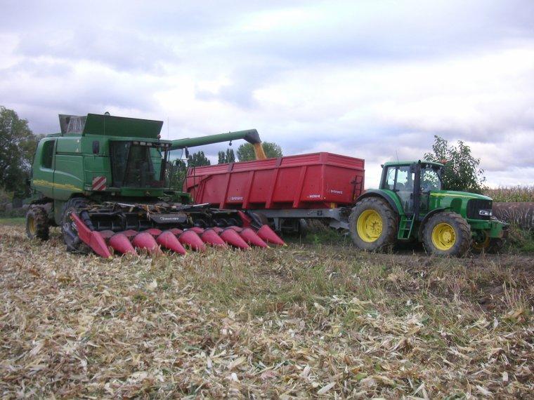des vertes pour le maïs