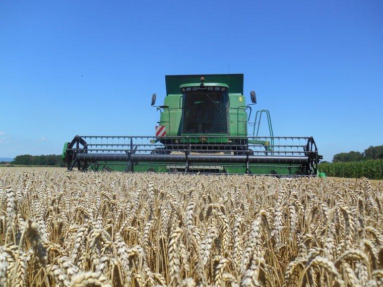 premier chantier de blé 2014