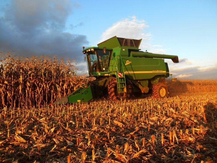 une autre journée de maïs