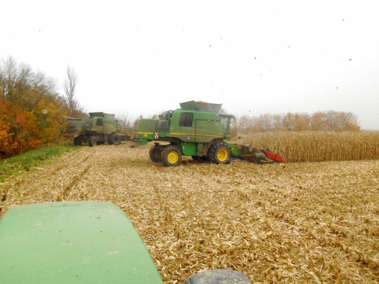 un des derniers chantiers de maïs hier
