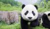 PandaaWorld