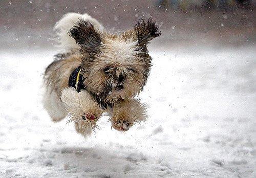 002 Cute dog ♥