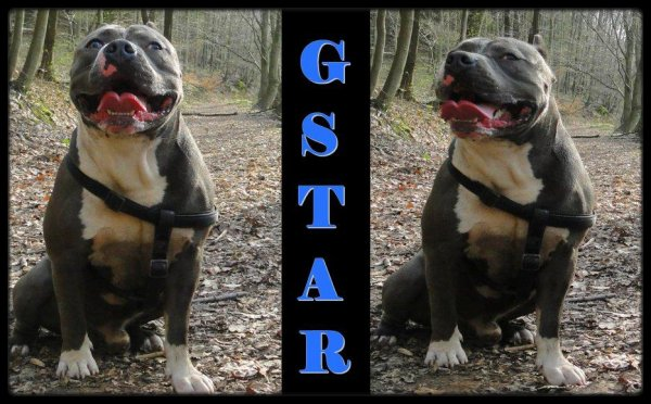 G-Star The King
