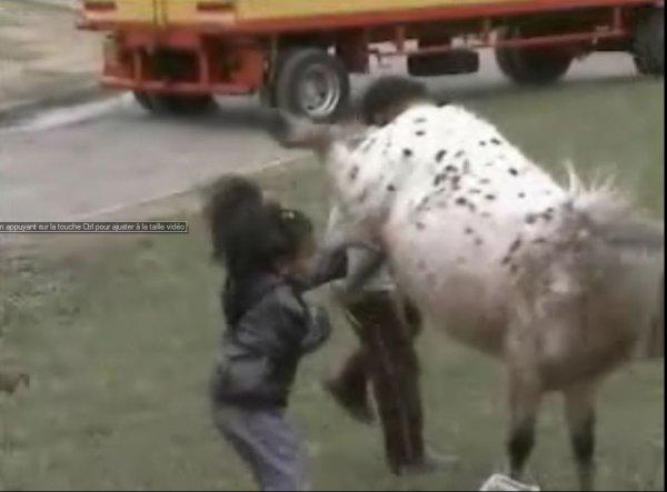 poney qui donne un coup de sabot