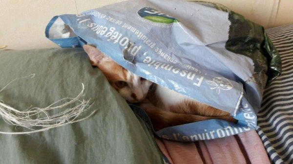 Coucou rocky tu me vois je suis cacher dans mon sac