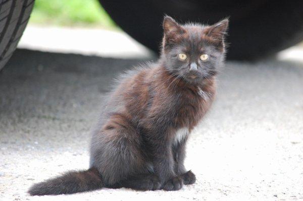 petit chaton sauvage que seul mon objectif peut approcher grrr ....