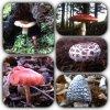 Au hasard de ma petite rando :-) rencontre avec les champignons